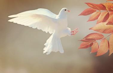 dove-2516641_1280