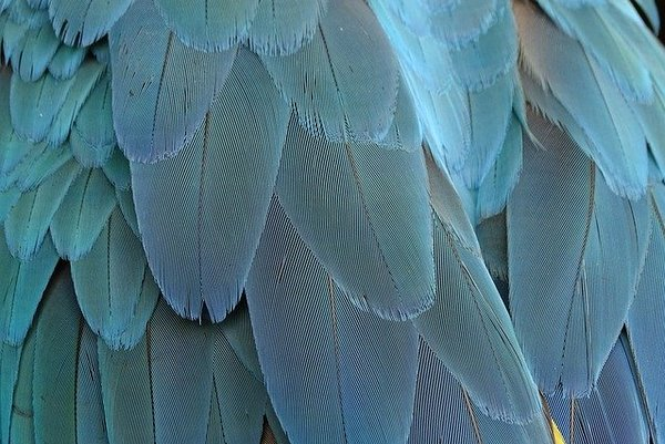 feather-1952382_640