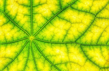 photosynthesis-4543260_640